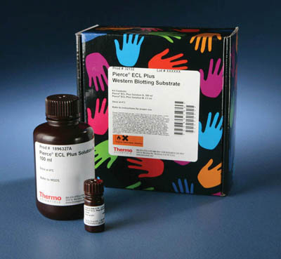 Thermo Scientific™Pierce™ ECL Plus Western Blotting Substrate  Products
