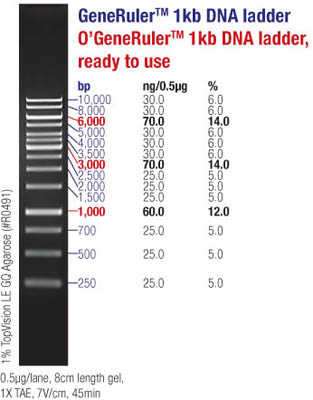 Thermo Scientific Generuler 1kb Dna Ladder 1kb Dna