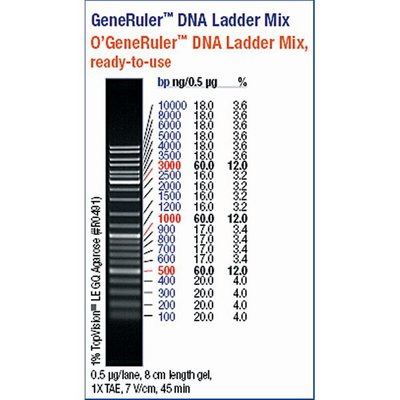 Thermo Scientific O Generuler Dna Ladder Mix Ready To