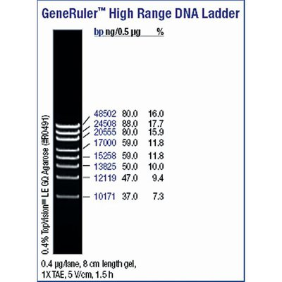 Thermo Scientific Generuler High Range Dna Ladder Ready