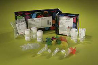Thermo Scientific™ 1-Step Human High-Yield Maxi IVT Kit 10 x 100μL kit Thermo Scientific™ 1-Step Human High-Yield Maxi IVT Kit