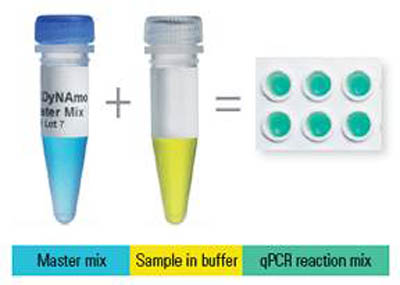Thermo Scientific™ DyNAmo ColorFlash SYBR Green qPCR Kit 2500 Reactions Thermo Scientific™ DyNAmo ColorFlash SYBR Green qPCR Kit